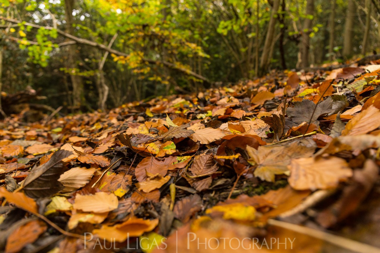 Dog Hill Wood, Ledbury, Herefordshire in Autumn nature photographer photography landscape 2688