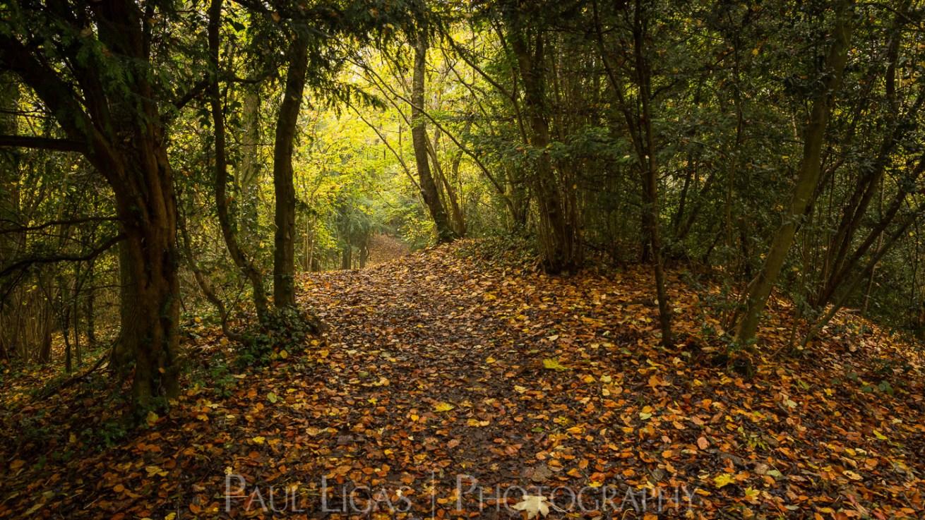 Dog Hill Wood, Ledbury, Herefordshire in Autumn nature photographer photography landscape 2697