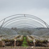 General Public, Ledbury, Herefordshire farming agriculture photographer photography polytunnel The Hop Project 4301