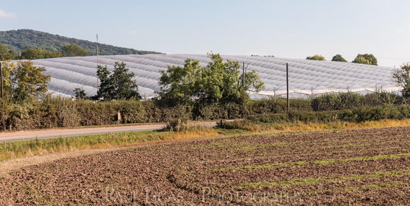 General Public, Ledbury, Herefordshire farming agriculture photographer photography polytunnel The Hop Project landscape 1700