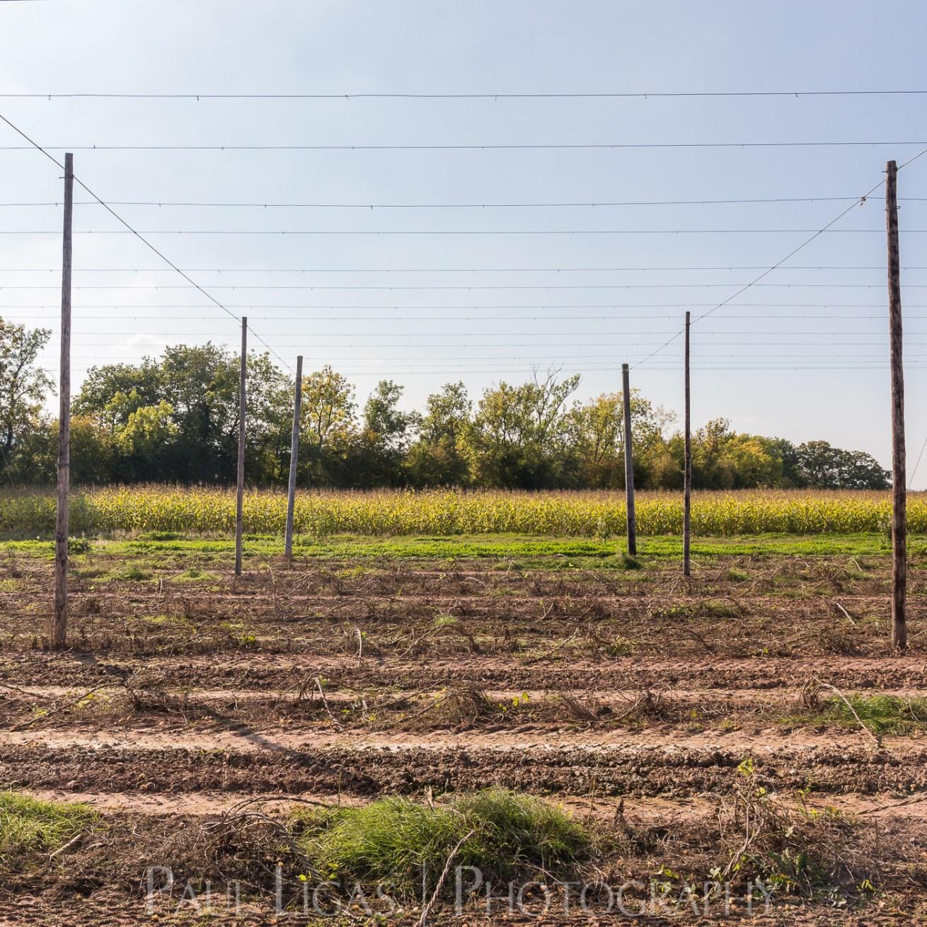 General Public, Ledbury, Herefordshire farming agriculture photographer photography The Hop Project hop wires landscape 1796