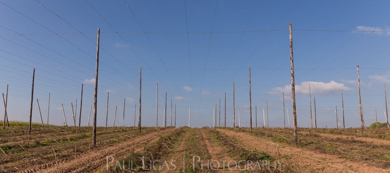 General Public, Ledbury, Herefordshire farming agriculture photographer landscape photography hops 1799