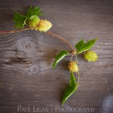 The Hop Garland, Bosbury, Herefordshire product photographer photography 5183