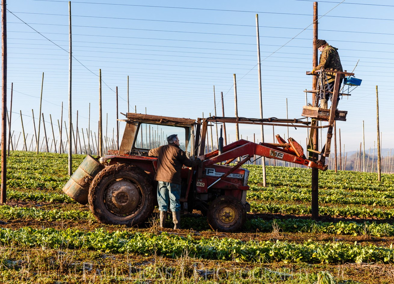 Townend Hop Farm, Herefordshire farming agriculture photographer hop yard photography 7423