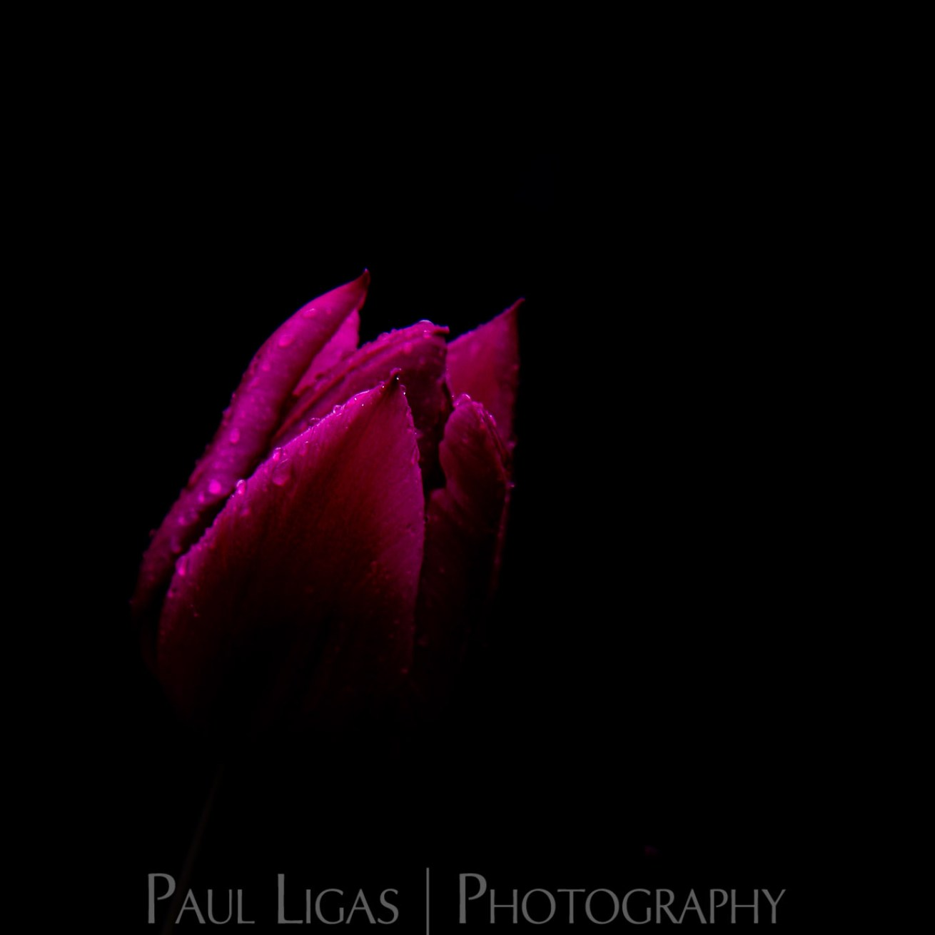 Mill House Farm product photographer photography hereford flowers 0450