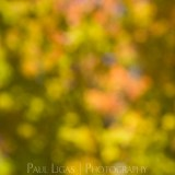Fall Leaves, autumn fine art photographer abstract photography herefordshire 1912