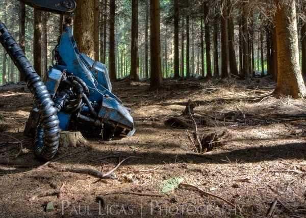 Forestry, fine art photography photographer herefordshire