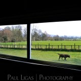 Life On The Farm, fine art farming photographer photography herefordshire 0787