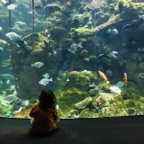 Steinhart Aquarium, San Francisco, fine art photographer photography people herefordshire 5269