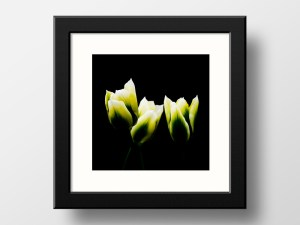 Paul Ligas Photography Print Yellow Tulips 3 mockup