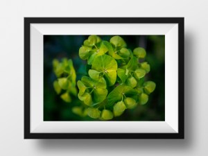 Paul Ligas Photography Print flowering euphorbia mock up