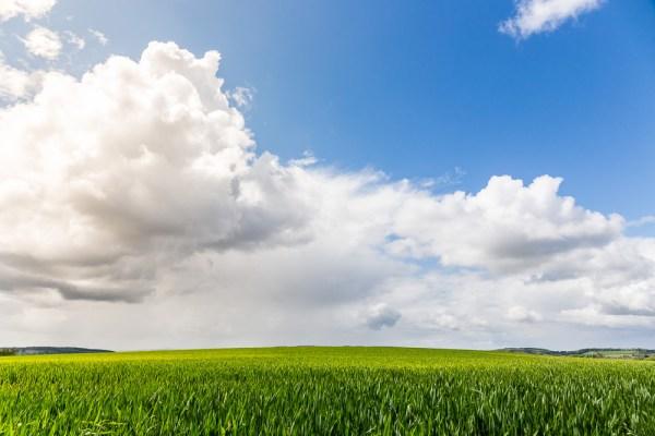Paul Ligas Photography Print Early Summer Wheat Field