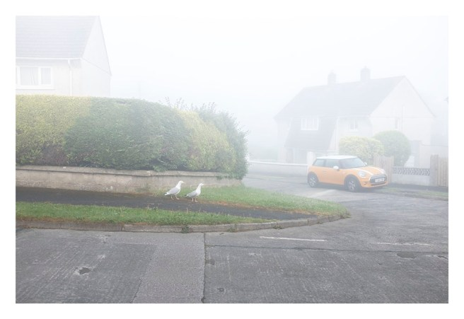 Seagulls in the mist