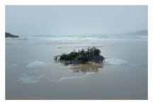 Treyarnon Bay low tide