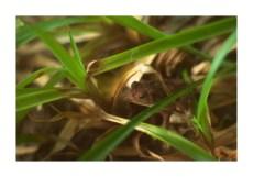 Frog Framed