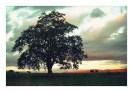 meg tree shot