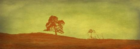 tint tree 1