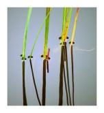 Zen Reeds Framed