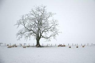 tree-n-sheep