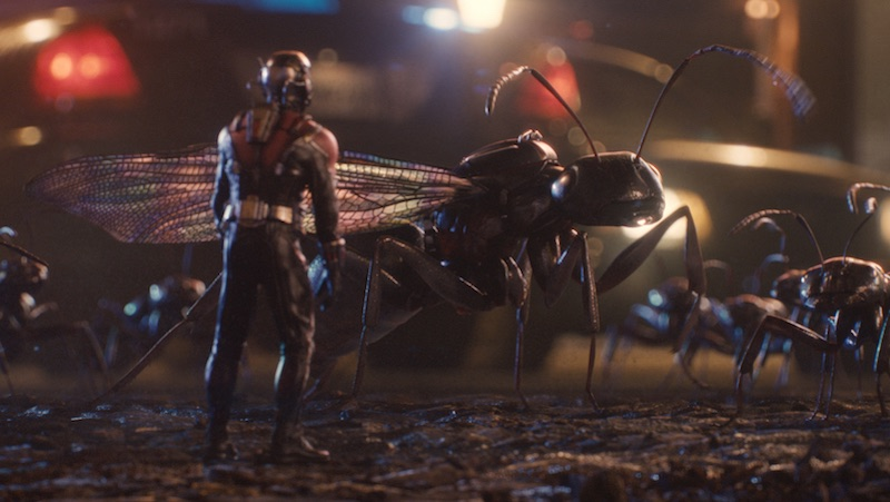 Ant-Man bugs