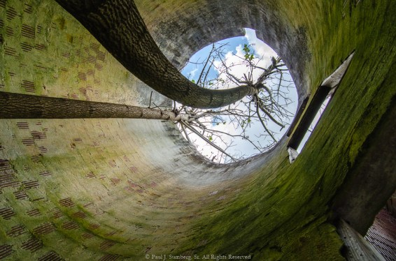 Trees growing in a silo