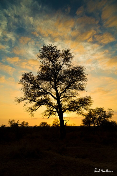 Early hours in the Kruger National Park, South frica