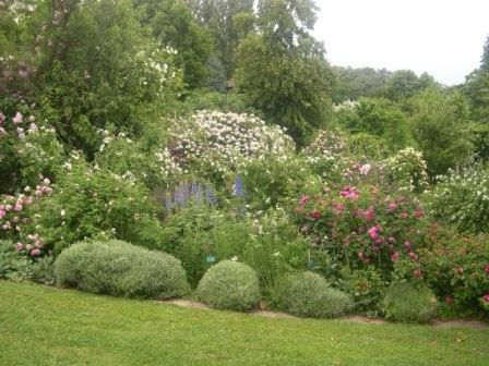 Roses belong with other plants in a flower border.
