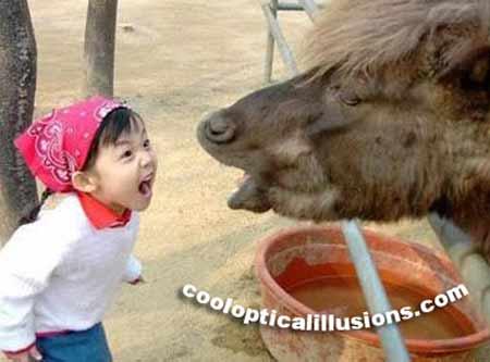girl-horse.jpg