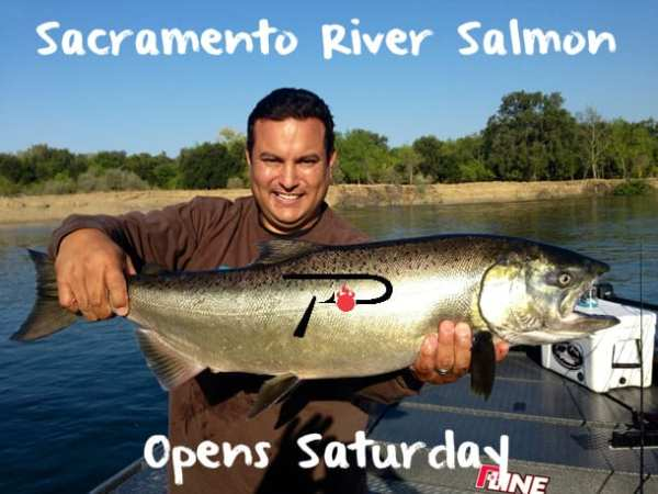 Sacramento River Salmon Season Opens Saturday Pautzke