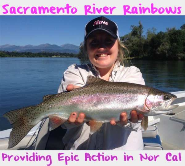 Sacramento River Rainbows Providing Epic Action in Nor Cal