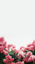 iphone wallpapers spring background symphony march
