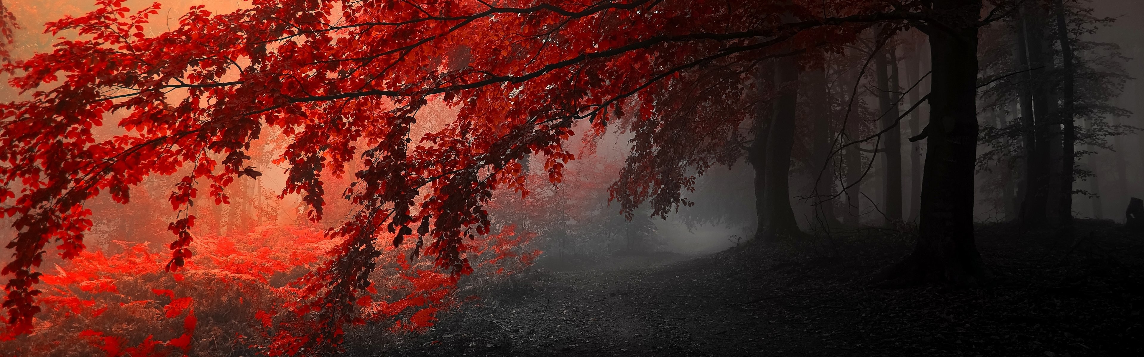 Fall Wallpapers Multiple Monitors Dual Monitor Wallpapers Hd 53 Background Pictures