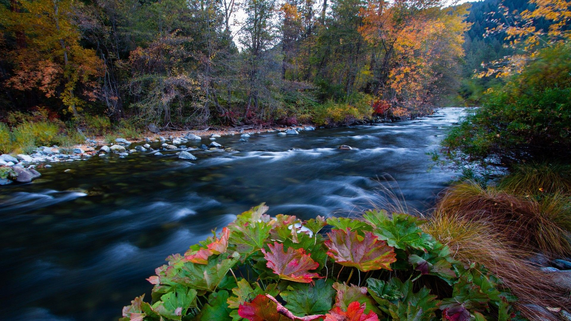 Free Fall Hp Widescreen Wallpapers Autumn Wallpapers 1920x1080 78 Background Pictures