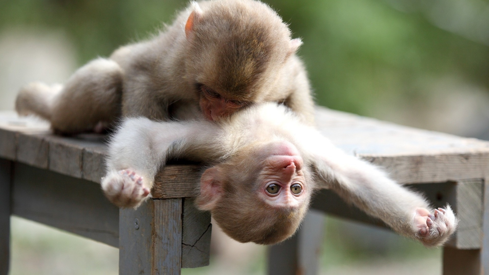Monkeys And Bananas Cute Wallpaper Monkey Funny Wallpapers 54 Background Pictures
