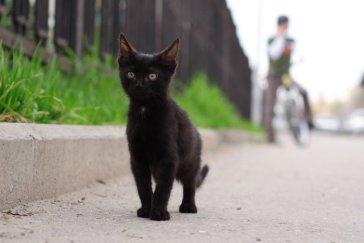 Черный целеустремленный кот