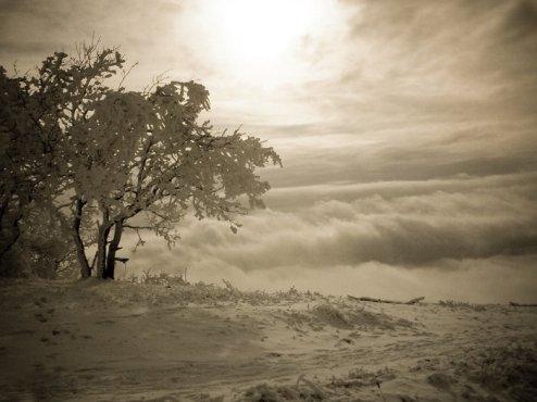 Дерево на Машуке, город в тумане