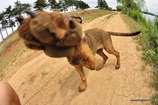 Фишай фото животных