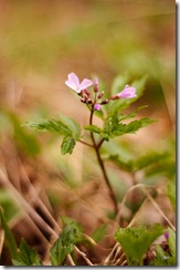 Тестовое фото Nikkor 50 1.8 D - макро