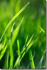 Тестовое фото Nikkor 50 1.8 D - растения