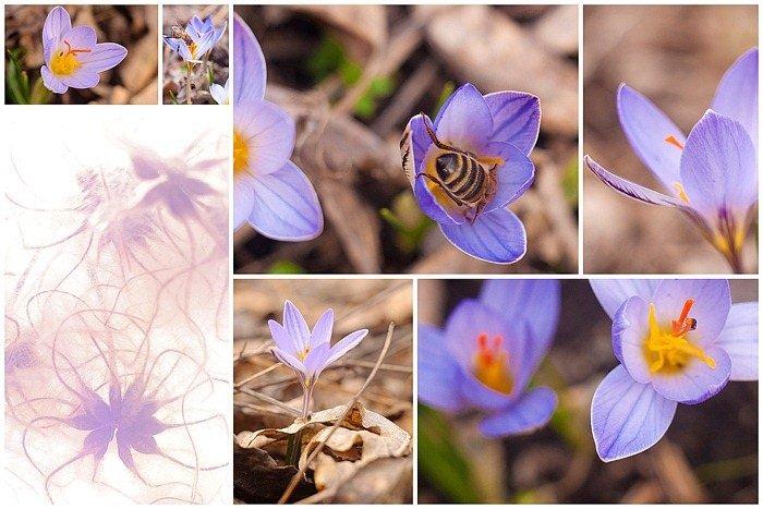 Весенние цветы в Пятигорске