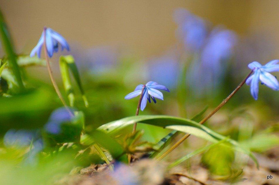 Машук весной