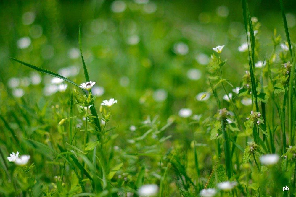 Весна! фото