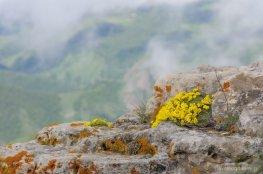 Цвета растут на камнях, прямо над обрывом