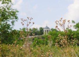 Пятигорская Эолова арфа, вид из травы