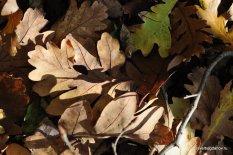 autumn-pyatigorsk-17