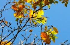 autumn-pyatigorsk-19