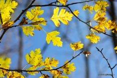 autumn-pyatigorsk-22
