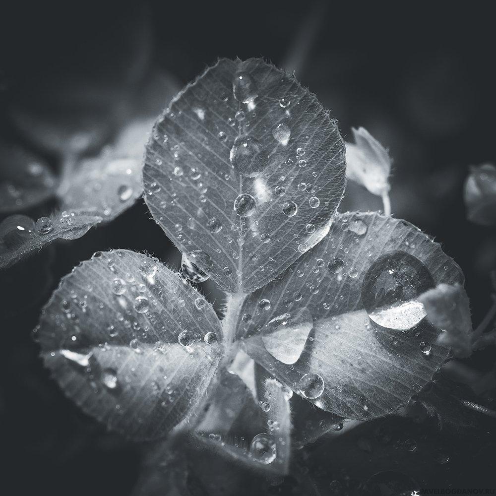 Макро - листья клевера