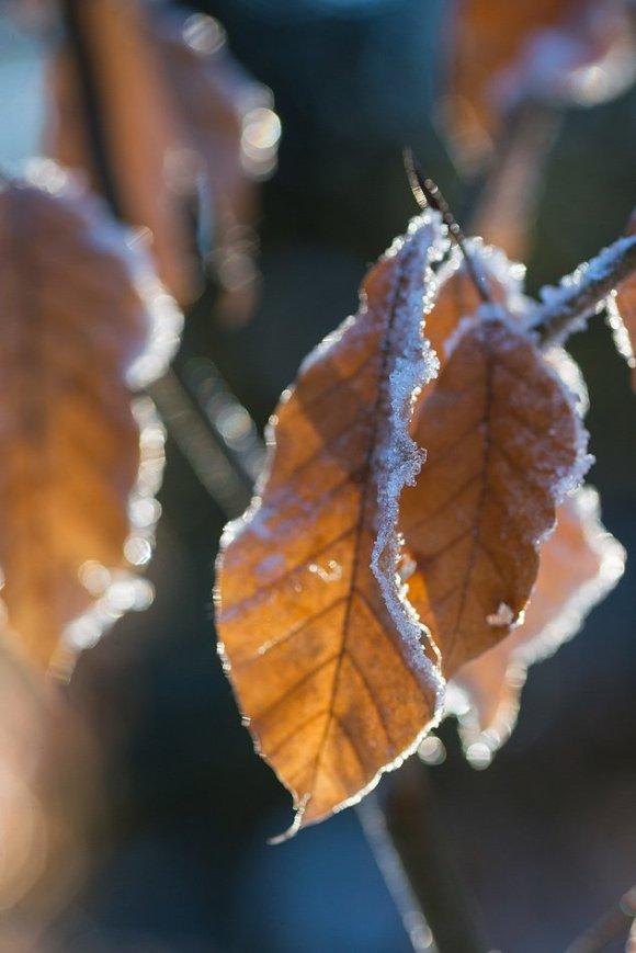 Замерзшие листочки
