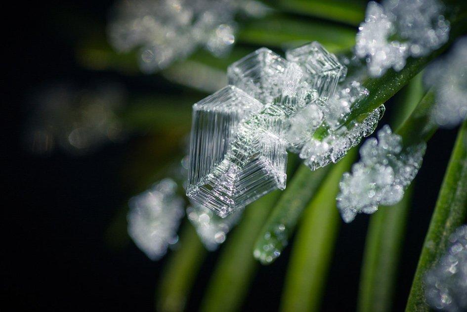 Лёд на еловой иголке